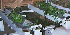 Выращивание растений на гидропонике. #1