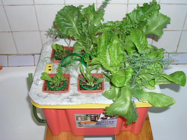 Выращивание растений на гидропонике. #0